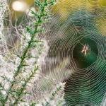 Hjælp dit barn af med angst for edderkopper